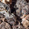 3 Ways to Dry Morel Mushrooms   ultimatemedicinalmushrooms.com
