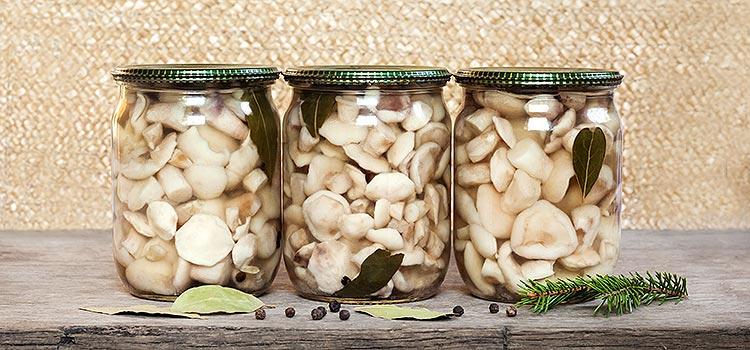 Learn How to Make Mushroom Tincture in 9 Easy Steps | ultimatemedicinalmushrooms.com