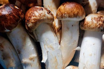 10 Interesting Facts About Matsutake Mushrooms | ultimatemedicinalmushrooms.com