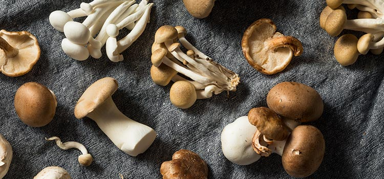 4 Different Mushroom Types You Should Know| ultimatemedicinalmushrooms.com