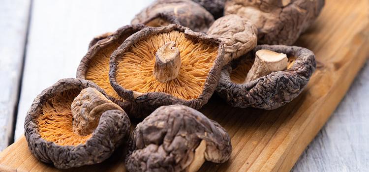 Shiitake Mushroom: The Ultimate Guide To This Wonderful Mushroom | ultimatemedicinalmushrooms.com