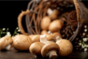 5 Answers for Your What is a Mushroom Questions | ultimatemedicinalmushrooms.com
