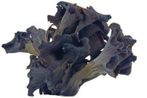 photo of a black trumpet mushroom