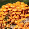 9 Facts To Know About The Bolete Mushroom | ultimatemedicinalmushrooms.com