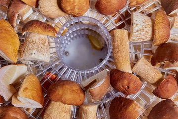 6 Tips To Follow When You Are Thinking Of Dehydrating Mushrooms | ultimatemedicinalmushrooms.com