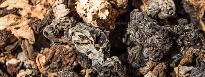 Close-up image of a bunch of dried morel mushrooms