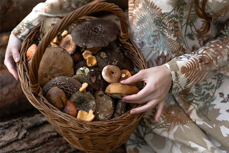 A Beginner's Guide to Becoming A Mushroom Hunter | ultimatemedicinalmushooms.com