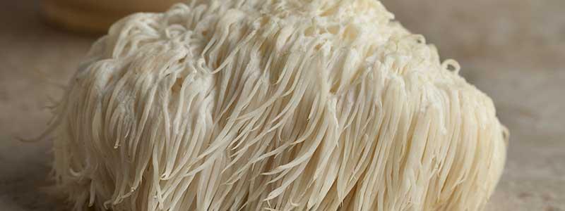 Close-up photo of a fresh Lion's Mane Mushroom