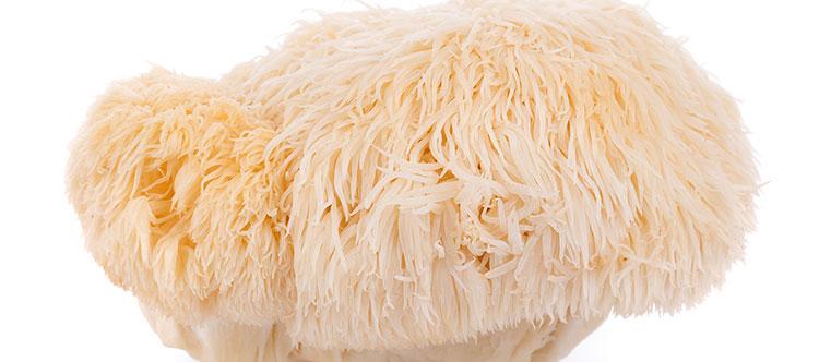 Close-up photo of lion's mane mushroom