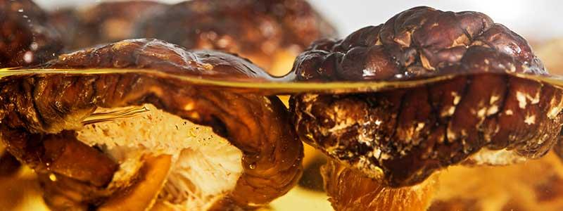 Close-up photo of shiitake mushrooms being soaked